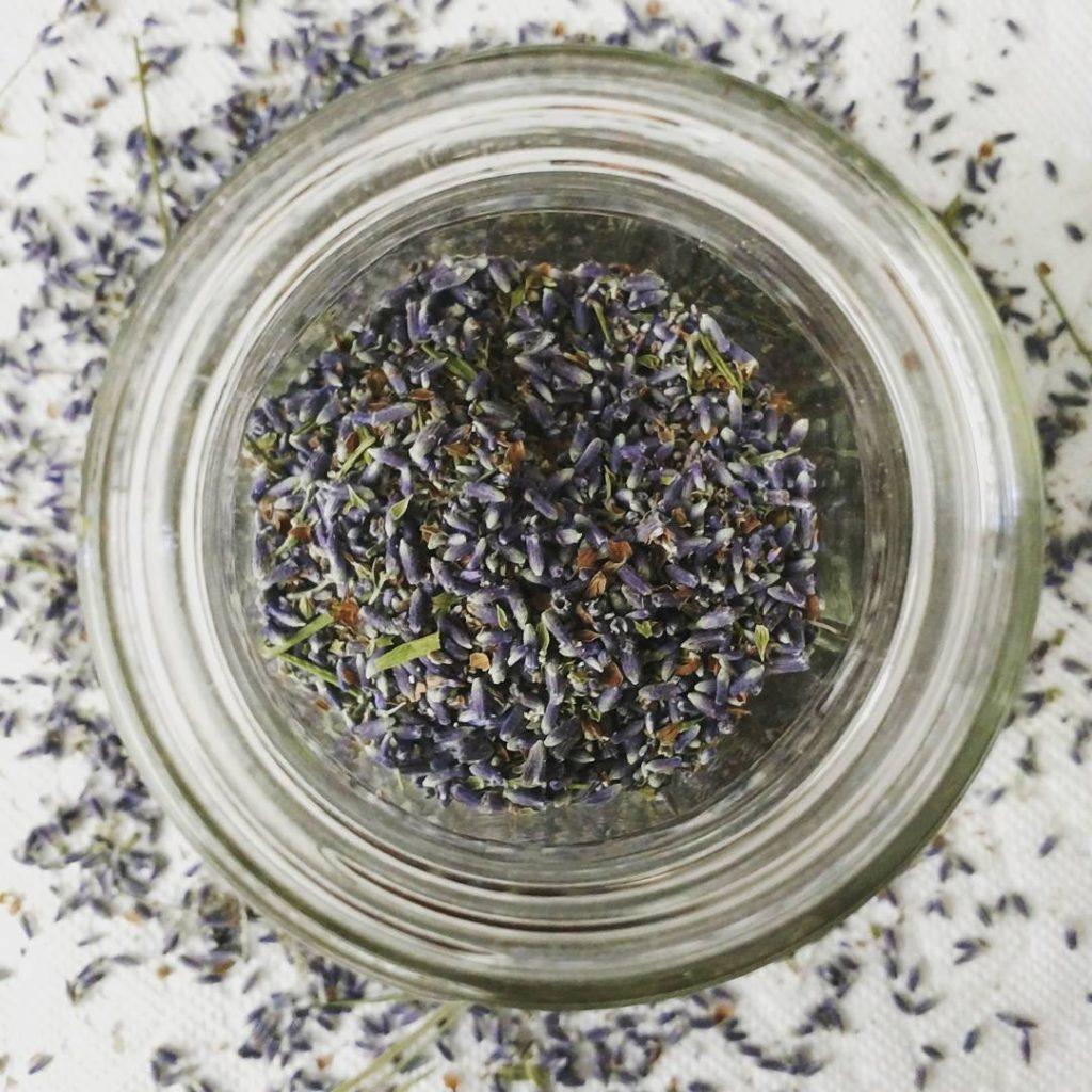 using-fresh-lavender-classycurlies1