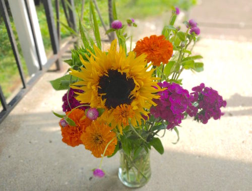 brighten-home-with-plants-classycurlies